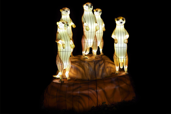 5 Otters perched atop a rock at Asian lantern festivals.