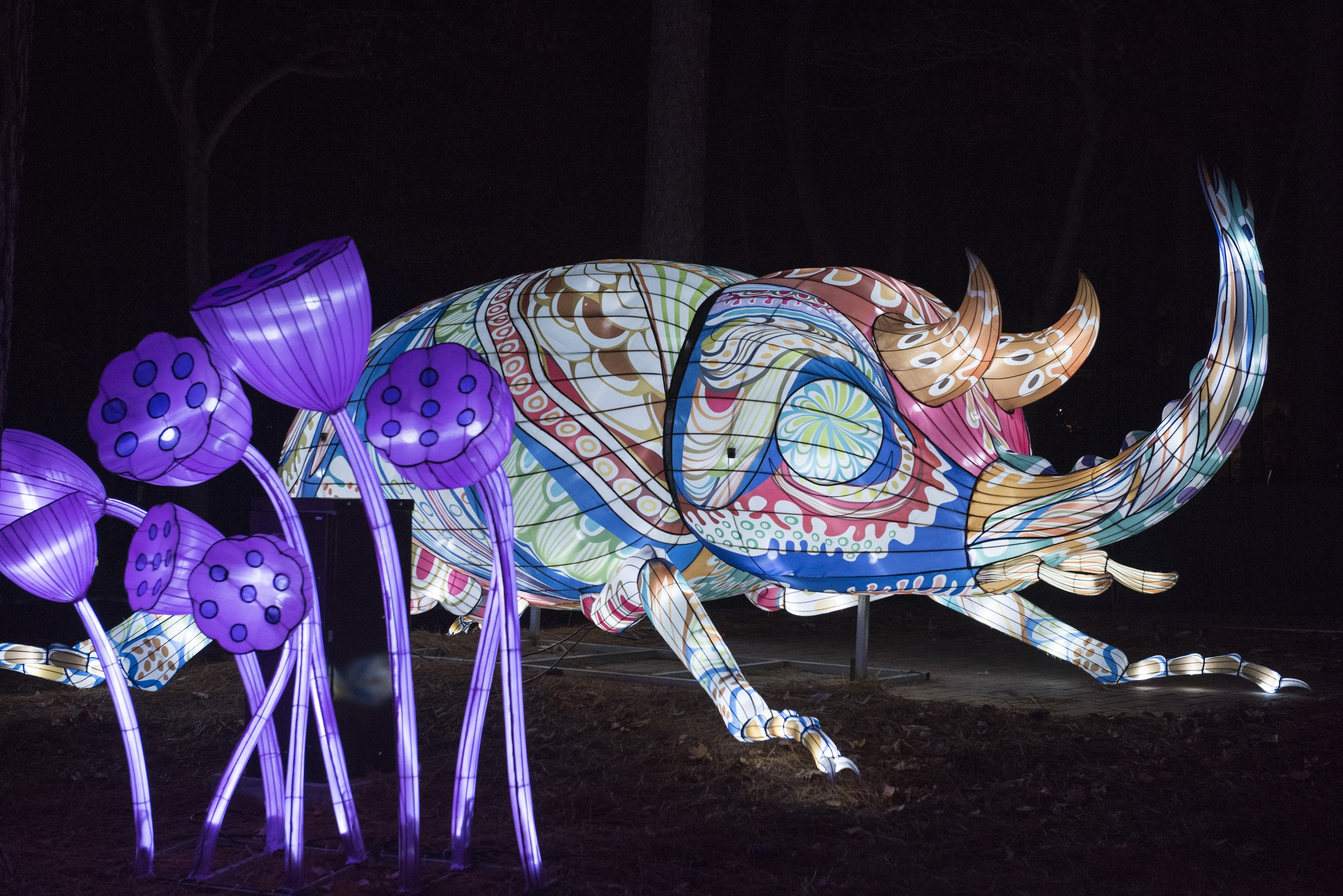 A larger than life patterned beetle at the North Carolina Chinese Lantern Festival