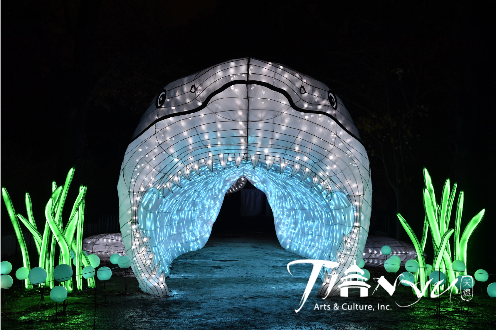 Walk into the mouth of a Chinese lantern great white shark.
