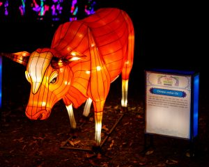 Year of the Ox Chinese lantern
