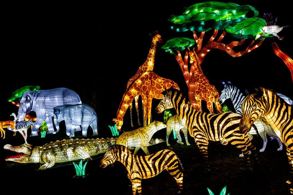 Chinese Lanterns of African Wildlife