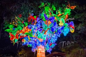 Butterfly tree featured at the third annual Asian Lantern Festival at the Metroparks Zoo. Photo by Edmond Wong.